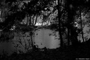 04-12-11_033 foret #2 (c)